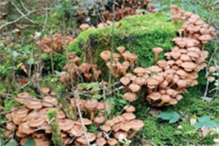Siedlerverein Traun-West, Startseite - Tipps zum richtigen Sammeln von Pilzen