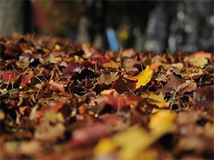 Siedlerverein Pregarten, Gartentipps - Gartenarbeiten im November