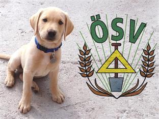 Landesorganisation Oberösterreich, Startseite - Hundehaftpflicht