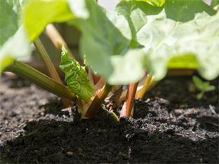 Siederlverein,Gartenarbeiten im Mai