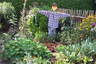 Siedlerverein Pregarten, Gartentipps - Mischkultur beim Gemüsegarten