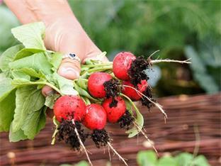 Siederlverein,Gartenarbeiten im Juni