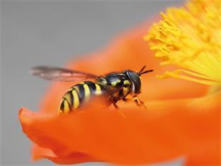 Siedlerverein Haag, Sommer - Wespen - nur keine Panik!