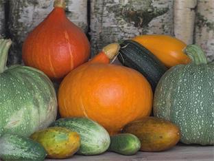 Siederlverein,Gartenarbeiten im Oktober