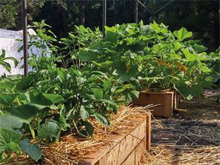 Siederlverein,Gartenarbeiten im Juli
