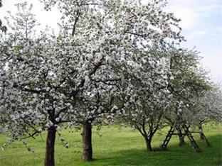 Siederlverein,Gartenarbeiten im April