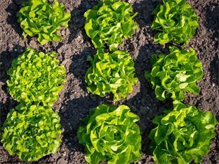 Landesorganisation Oberösterreich, Gartentipps - Gartenarbeiten im Juni