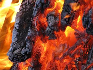 Schädlingsverbrennung