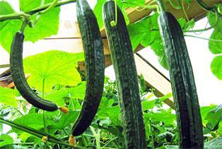 Gemüse - Einlagerung